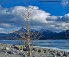 Un arbre mort près du lac