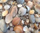 Pierres et coquillages de mer