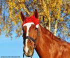 Cheval chapeau Santa Claus