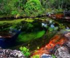 La fleuve Caño Cristales dans la sierra de la Macarena, Colombie