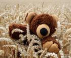Ours en peluche, céréales