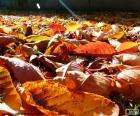 Feuilles mortes en automne