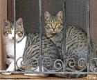 Deux chats dans une fenêtre