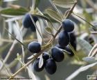 Noir rameau d'olivier