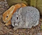Une paire de lapins
