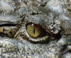 Yeux de crocodile