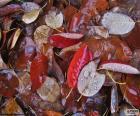 Feuilles d'automne humide