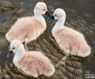 Trois petits cygnes