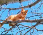 Chat sur une branche