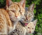 Trois chats regarder