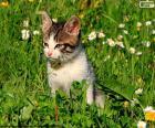 Chat dans le champ