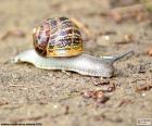Escargot sur le terrain