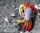 Crabe de couleurs