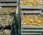 Boîtes de champignons