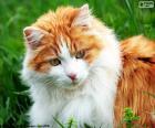 Un chat élégant