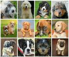 Collage des chiens