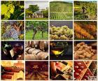 Collage de vin