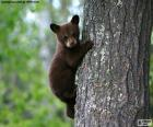 Ourson brun grimpe un arbre