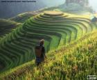 Rizières en terrasses, Thaïlande