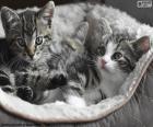 Deux chatons mignons