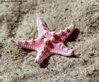 Belle étoile de mer