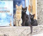 Trois chats sur l'étape de porte d'une vieille maison