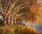 Arbres par le lac en automne