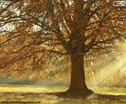 Arbre à feuilles caduques en automne