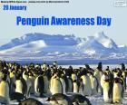 Journée de sensibilisation des pingouins