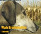 Journée mondiale greyhound
