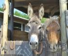 Têtes d'âne et poney