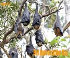 Journée d'appréciation des chauves-souris