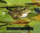 Journée internationale pour la conservation des amphibiens