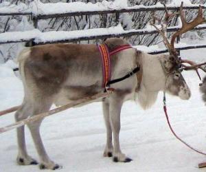 Puzzle rennes de Noël tirant un traîneau