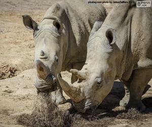 Puzzle Rhino manger