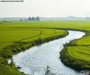 Puzzle Rivière entre les rizières