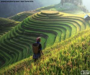 Puzzle Rizières en terrasses, Thaïlande