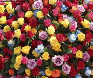 Puzzle Roses multicolores