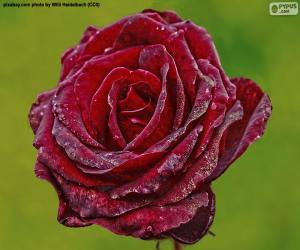 Puzzle Rouge rose