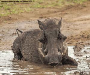 Puzzle Sanglier dans la boue
