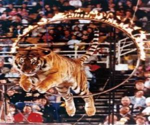 Puzzle Saut du tigre intérieur d'un cercle de feu