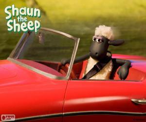 Puzzle Shaun conduire une voiture