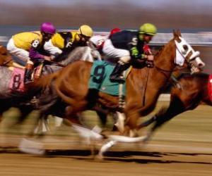 Puzzle Sport hippique - Course de chevaux à l'hippodrome