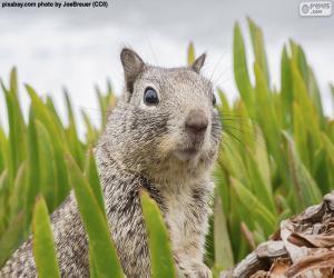Puzzle Tête d'écureuil