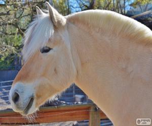 Puzzle Tête de beige cheval