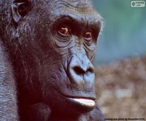 Puzzle Tête de gorille