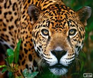 Puzzle Tête de Jaguar
