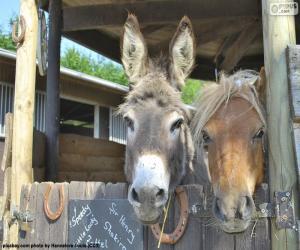 Puzzle Têtes d'âne et poney