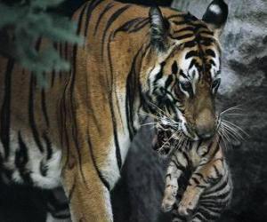 cougar avec jeune noire enculee