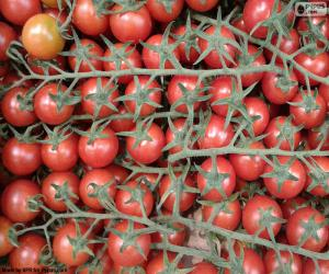 Puzzle Tomate en branche